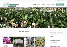 Aranbeem Orchids Home Page